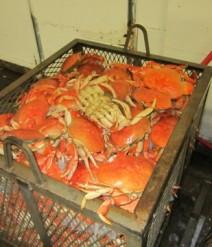 how to cook frozen rock crab clusters